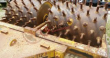 MASSEY FERGUSON 112 SHEEPS FOOT PULL BEHIND DRUMS